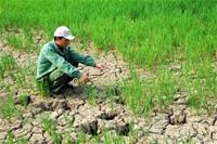 Một số giải pháp chủ yếu ứng phó với tác động của biến đổi khí hậu trong lĩnh vực lao động và xã hội